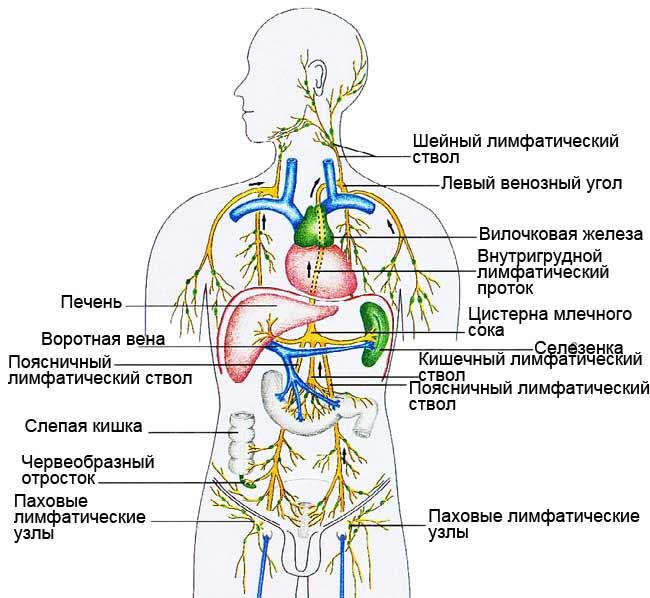 Рак вилочковой железы фото